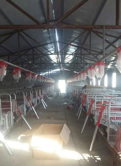 开元畜牧成功案例